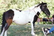 Reitbeteiligung Pony sucht Reiter