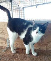 Katze Lilly möchte gern reisen