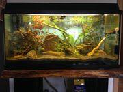 Juwel Aquarium 112 L mit