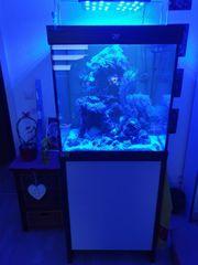 Meerwasser Aquarium mit kompletter Technik