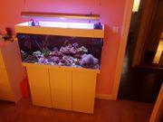 Aquarium juwel 180L