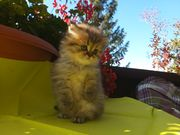Baby Kater