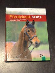 Pferdekauf heute