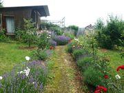 Pachtgarten in Kleingartenanlage zu verkafen