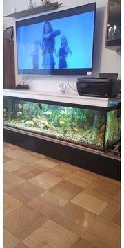 Ich Verkauf meine Aquarium 500l