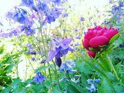 Garten für unsere kleine Familie