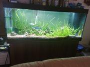 Großes Aquarium komplett