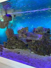 Meerwasser Aquarium 180l mit allen