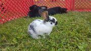 kleine Kaninchen suchen liebevolles zuhause