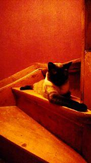 Katzen in liebevolles Zuhause abzugeben