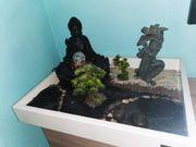 Zen Garten mit Buddha Brunnen