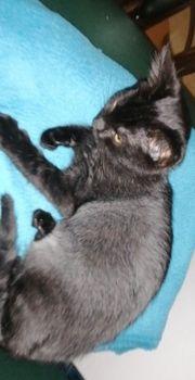 info vorher lesen Baby Katze
