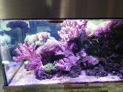 Meerwasseraquarium Auflösung Meerwasser Salzwasser