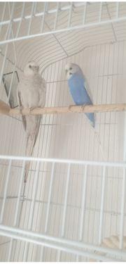 Zwei Vögel mit Käfig zu