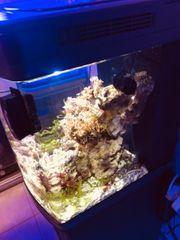 Nano Aquarium komplett