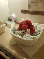 Aufzuchtbox Krankenbox für Vogel und