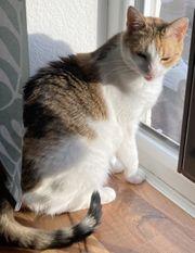 Katzenpärchen sucht neues Zuhause