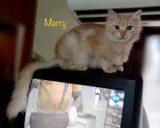 Merry und Happy Tierschutzkatzen