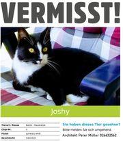 Katze vermisst in 56457 Westerburg -
