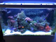 Meerwasser Aquarium Red Sea 250