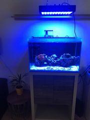 Meerwasser Aquarium mit Fische und