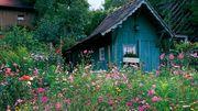 Suche Garten bzw Freizeitgrundstück zum