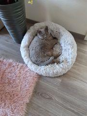 Katzenbett