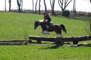 Suche Reitbeteiligung Mensch sucht Pferd