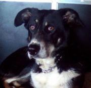 Manolis - Familienhund zu sein ist