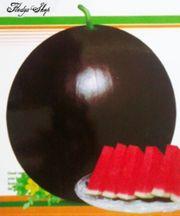 5 Melonen Samen schwarze Bombe
