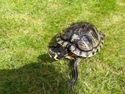 2 Wasserschildkröten mit allem drum
