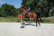 Deutsches Sportpferd zu verkaufen