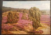 Uralte Postkarte Lüneburger Heide