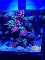 Red Sea Reefer Nano Komplettaquarium