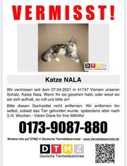 Katze vermisst Finderlohn 100EUR