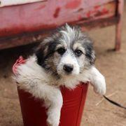 Tierschutzhündin Alea sucht Familienanschluss