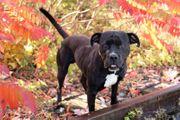 WALTER - Listenhund - Er ist sehr