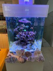 Nano Meereasser Aquarium komplett Schnäppchen