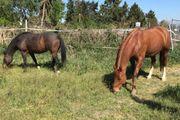 Grundstück Hof Haus zur Pferdehaltung