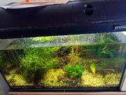 Aquarium komplett zu verkaufen