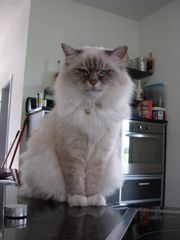 Tierbetreuung Hunde Katzen Kleintiere auch