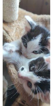 2 babykatzen sind abgabebereit