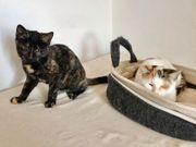 Thelma Louise blindes Katzenpaar ca