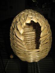 30 St Exoten Zebrafinken Finken