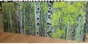 Glasbild Birkenwald