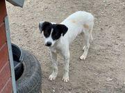 Milka ein neugieriges Hundemädchen sucht