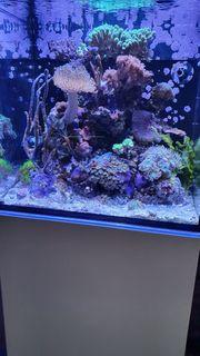 Meerwasseraquarium Red Sea Nano 75