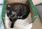 Sabrina süßes Katzenmädchen ca 5