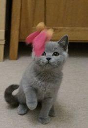 Liebevolle Tierbetreuung Katzensitting Katzen Betreuung
