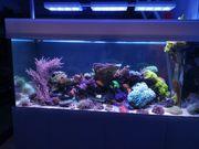 reserviert Meerwasseraquarium Auflösung